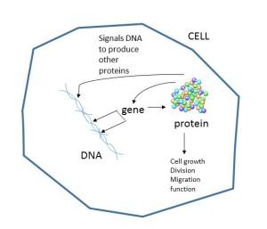 cell schema