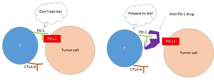 PD-L1 schema